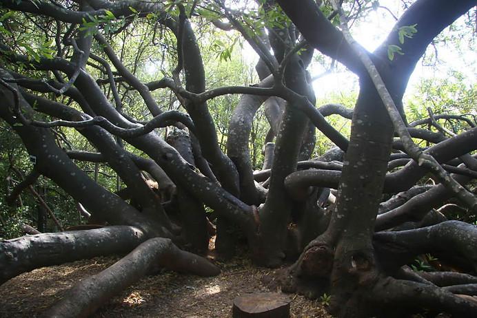 Jardins botaniques de Kirstenbosch 016