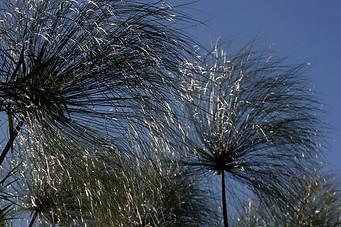 Jardins botaniques de Kirstenbosch 012