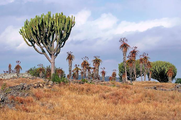Parcs Nationaux du Zimbabwe 011