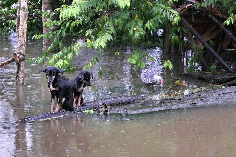 Amazonie péruvienne 040