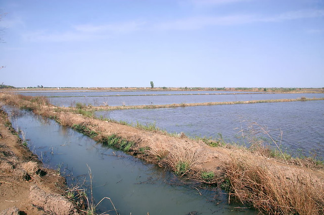 Vallée du fleuve Sénégal 039