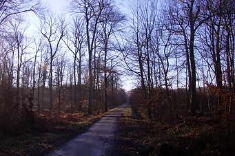 Forêt de Fontainebleau 026