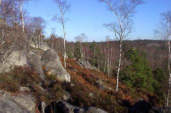 Forêt de Fontainebleau 001