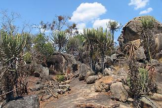 Parcs Nationaux du Zimbabwe 019