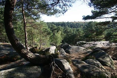 Forêt de Fontainebleau 036
