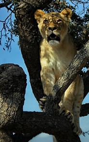 Parcs Nationaux du Zimbabwe 031
