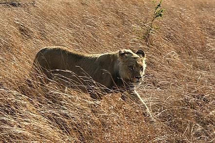 Parcs Nationaux du Zimbabwe 032