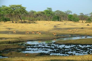 Parcs Nationaux du Zimbabwe 020