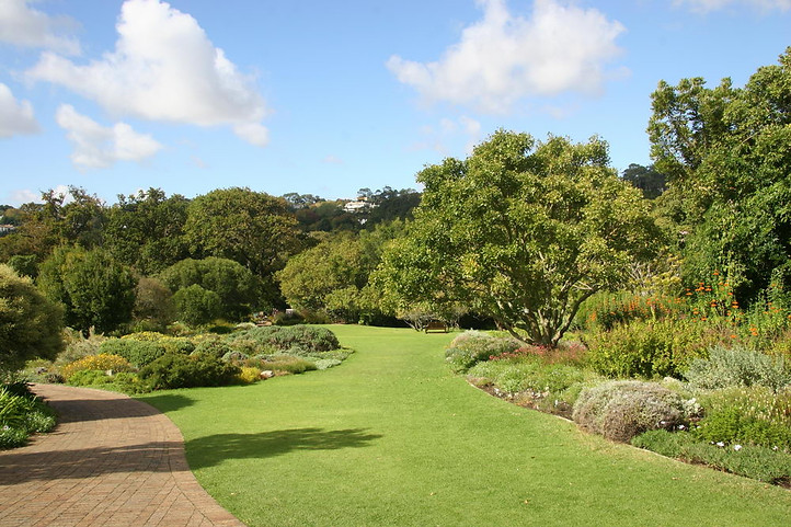 Jardins botaniques de Kirstenbosch 002