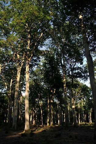 Forêt de Fontainebleau 037
