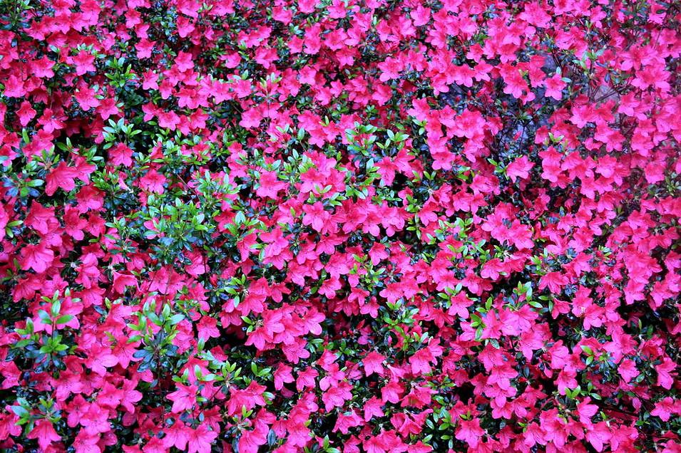 Parc floral de la Source 021
