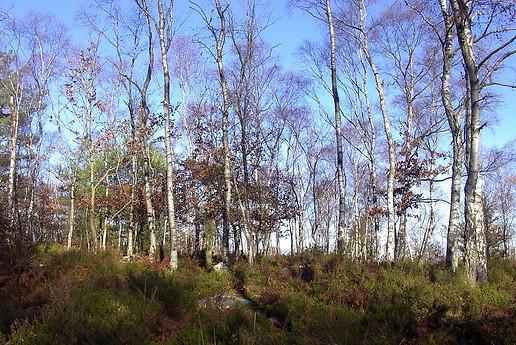 Forêt de Fontainebleau 009