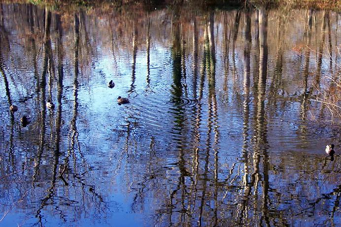 Forêt de Fontainebleau 007