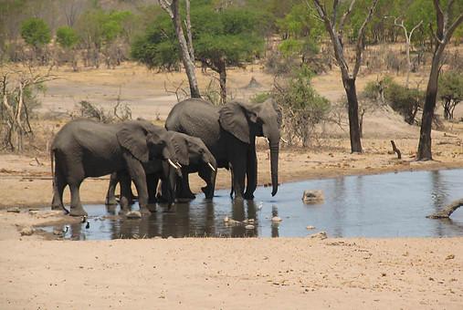 Parcs Nationaux du Zimbabwe 023
