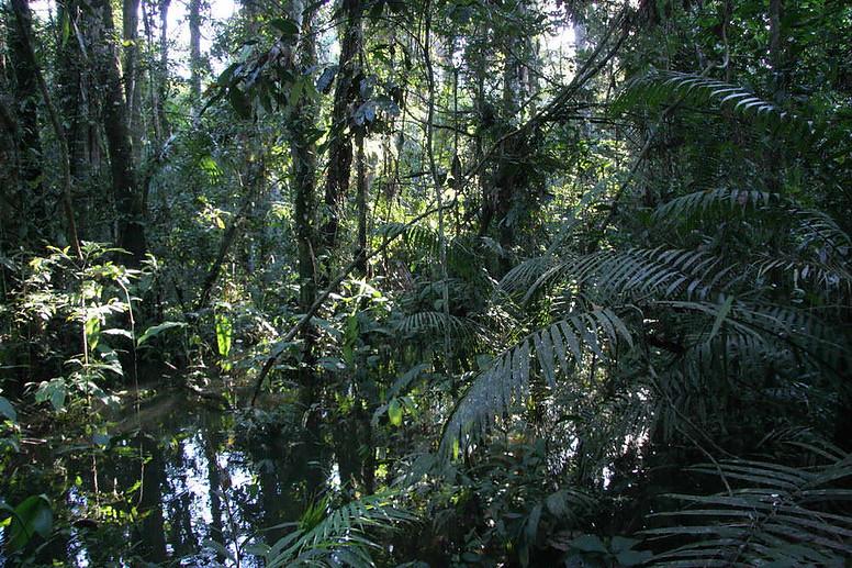 Amazonie péruvienne 032