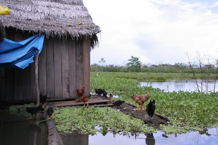 Amazonie péruvienne 027