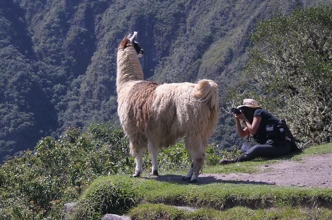 Machu Picchu 011