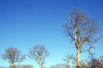Forêt de Fontainebleau 012