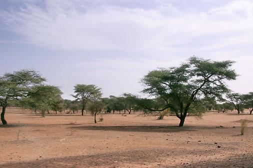 Vallée du fleuve Sénégal 004