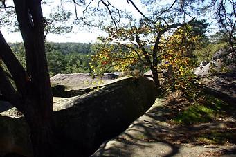 Forêt de Fontainebleau 014