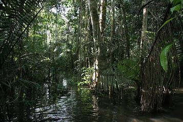 Amazonie péruvienne 030