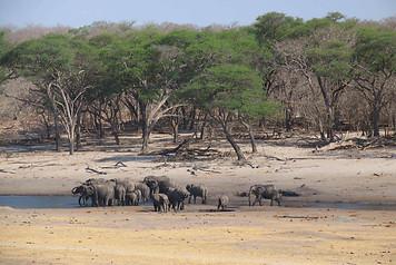 Parcs Nationaux du Zimbabwe 025