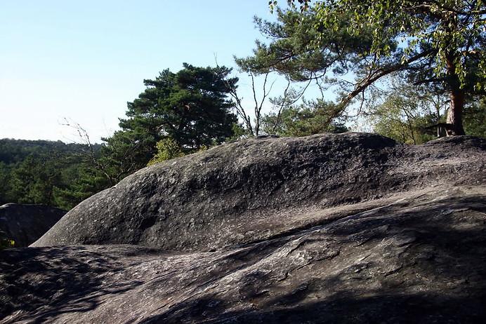 Forêt de Fontainebleau 022