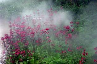 Parc floral de la Source 019