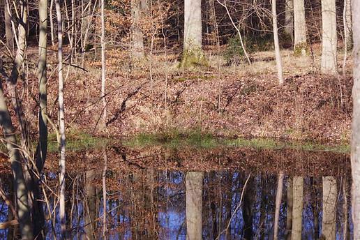 Forêt de Fontainebleau 010