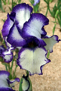 Parc floral de la Source 012