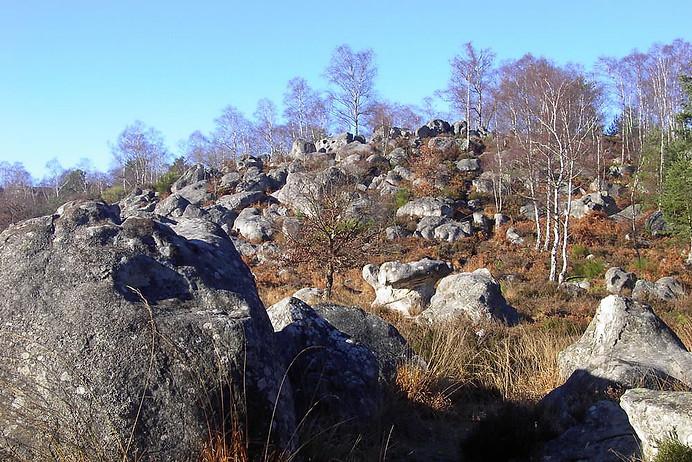 Forêt de Fontainebleau 003