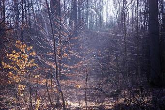 Forêt de Fontainebleau 020