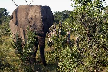 Parcs Nationaux du Zimbabwe 026