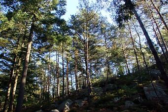 Forêt de Fontainebleau 031