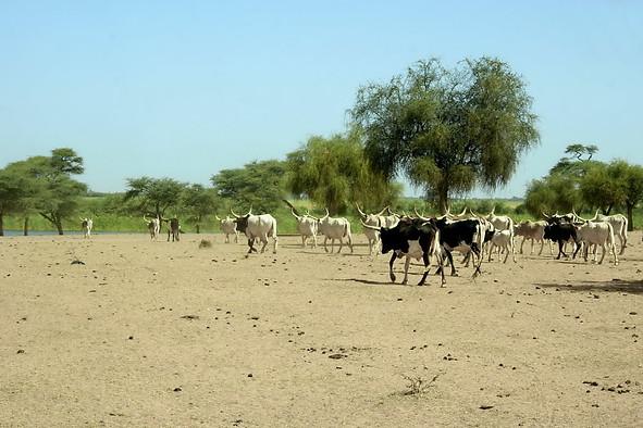 Vallée du fleuve Sénégal 015