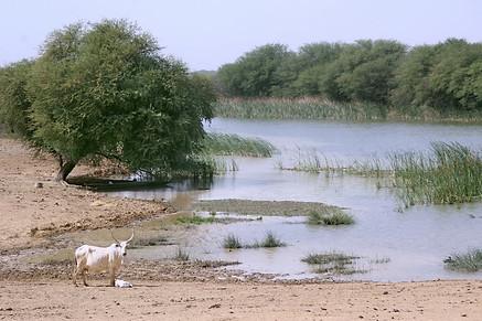 Vallée du fleuve Sénégal 038