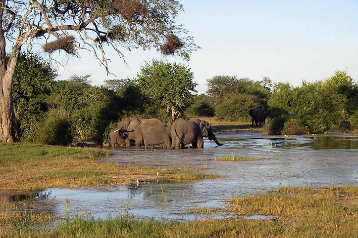 Parcs Nationaux du Zimbabwe 027