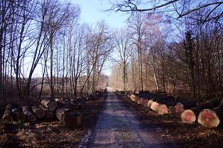 Forêt de Fontainebleau 038