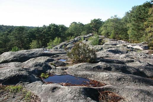 Forêt de Fontainebleau 028