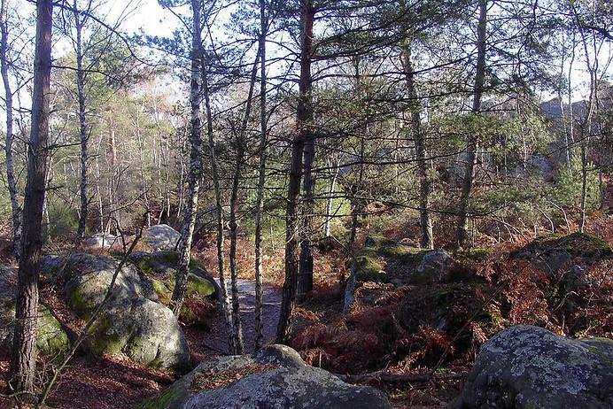 Forêt de Fontainebleau 011