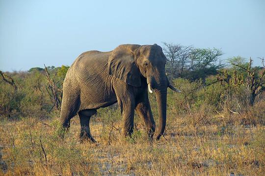 Parcs Nationaux du Zimbabwe 029