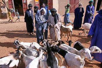 Vallée du fleuve Sénégal 027
