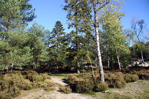 Forêt de Fontainebleau 040