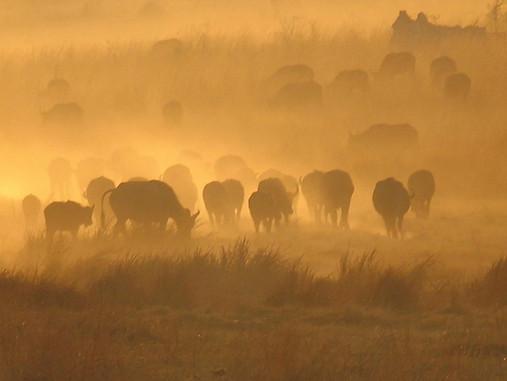 Parcs Nationaux du Zimbabwe 024