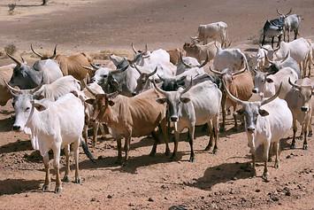 Vallée du fleuve Sénégal 040