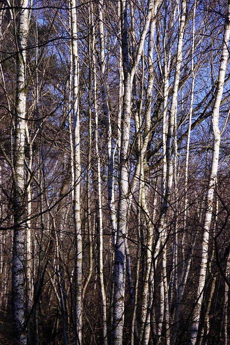 Forêt de Fontainebleau 033
