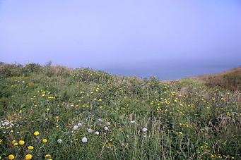 Wissant, Cap Blanc-Nez, Cap Gris-Nez 042