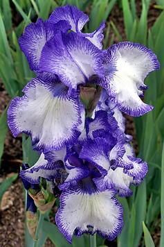 Parc floral de la Source 013