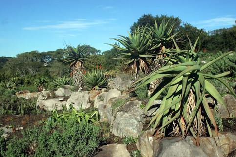 Jardins botaniques de Kirstenbosch 011