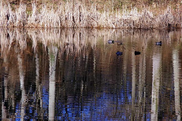Forêt de Fontainebleau 016